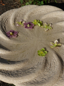 Bowls with Hellebores2